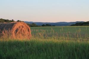 hayroll in landscape