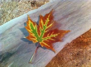 autumn 2014-first leaf