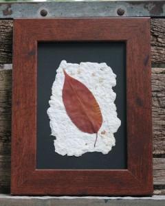 newly framed leaf