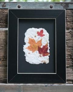 newly framed leaves
