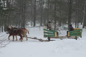 Jackson, horses & sleigh