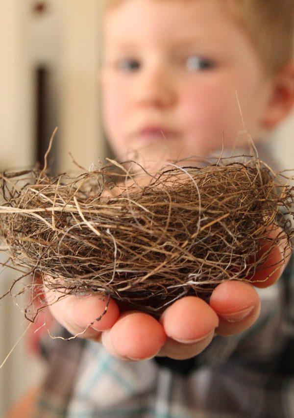 Spring's nest